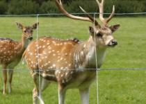 recinzioni zootecniche reti sud